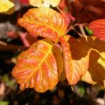 Poison Oak…